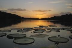 dsc7865-don-morice-lillie-pads-at-sunset-on-rupinunni-lake-2_01