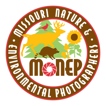 Full_Logo_Transparent_448