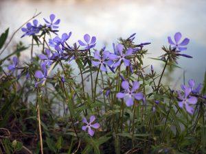 04/2021 – Wild Bloomers!
