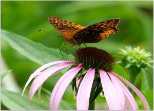 Butterflies: 05/2021